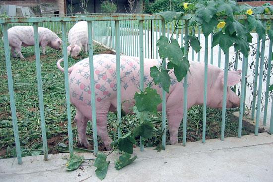 pigsinked