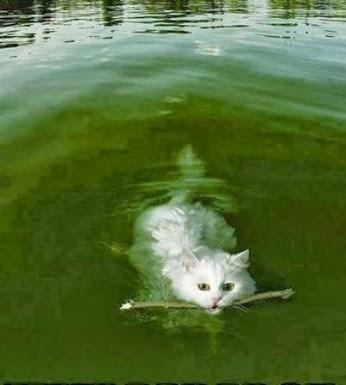 Cat_Stick_