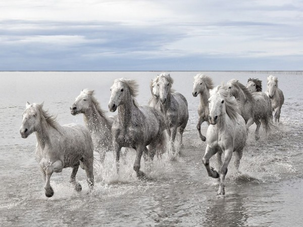 Wild Horses, Camargue, France - Photograph by Marco Carmassi, Your Shot