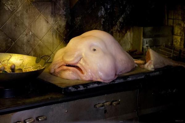 ocean-creatures-blobfish