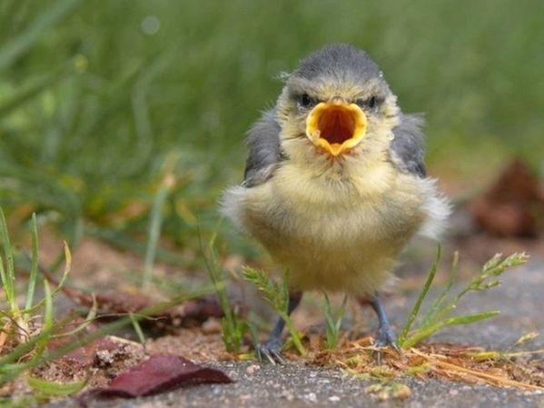 Bird_Angry