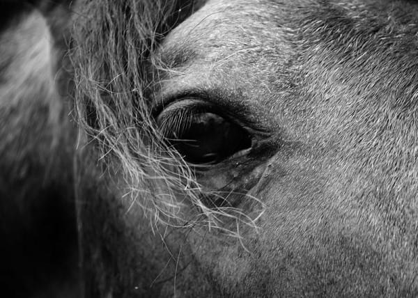 800px-Dark_horse_eye