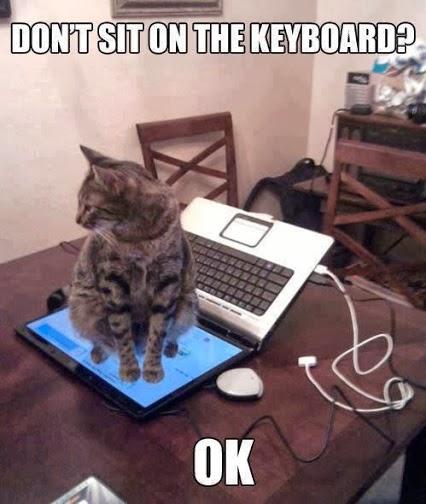 very-smart-cat
