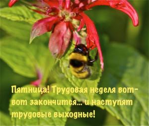 Bee IMG_3813