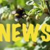 NEWS_BEE