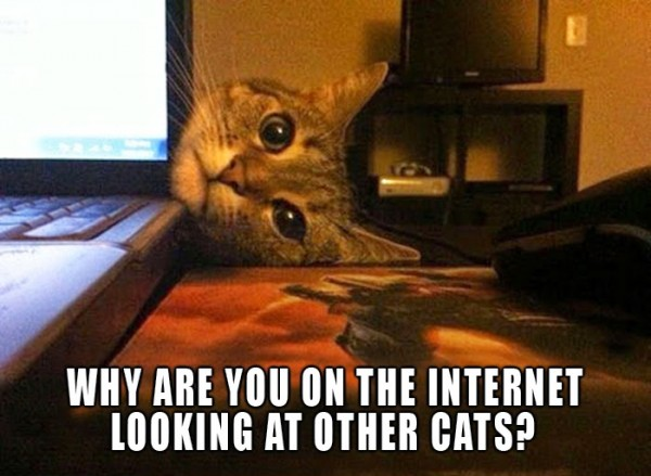 Why are you on the internet looking at other cats