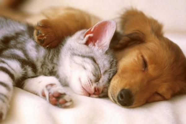 cuddly-kitten