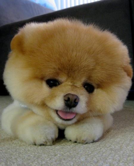 Cuddly puppy