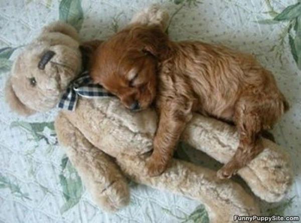 Cuddly_Sleeper