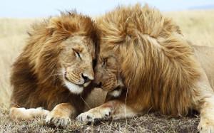 4393_lions