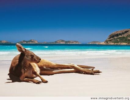 relax ... says the kangaroo