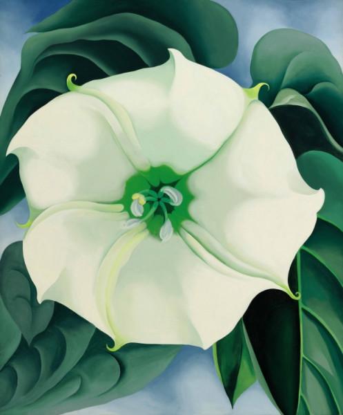 Jimson Weed/White Flower No 1