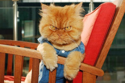 Meet_Garfi_The_World_s_Angriest_Cat.