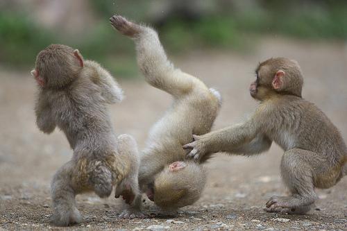 monkeying-around