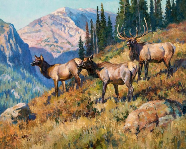 ELK IN THE HIGH COUNTRY.jpg