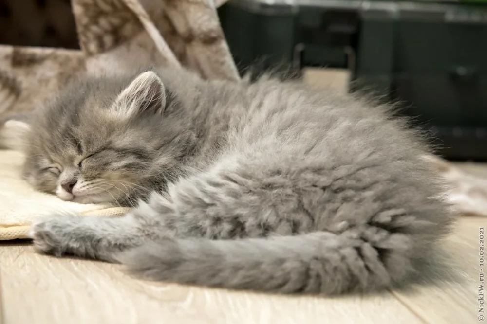 Котята много спят... © «Фото.дзен - NickFW.ru»
