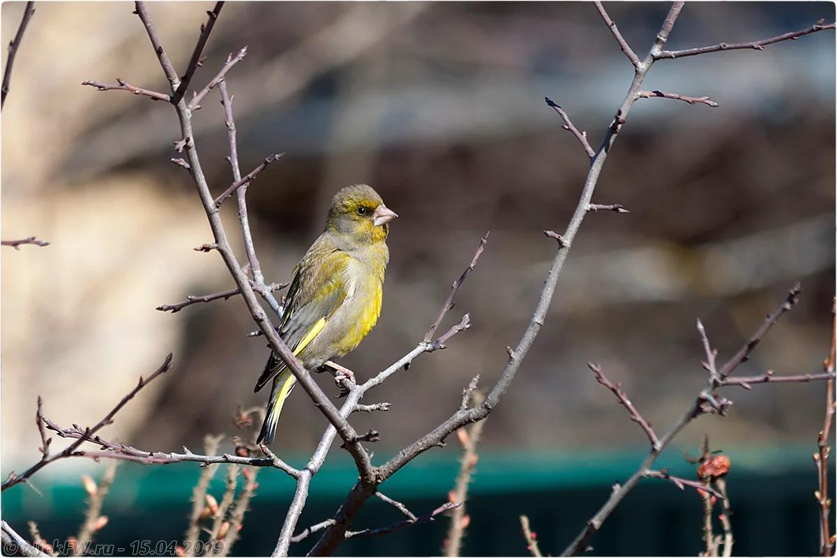 Зеленушка © «Фото.дзен - NickFW.ru»