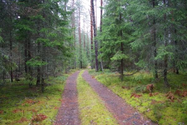 лес-дорога