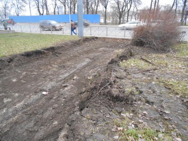 Уничтоженный кустарник и газон 15 ноября