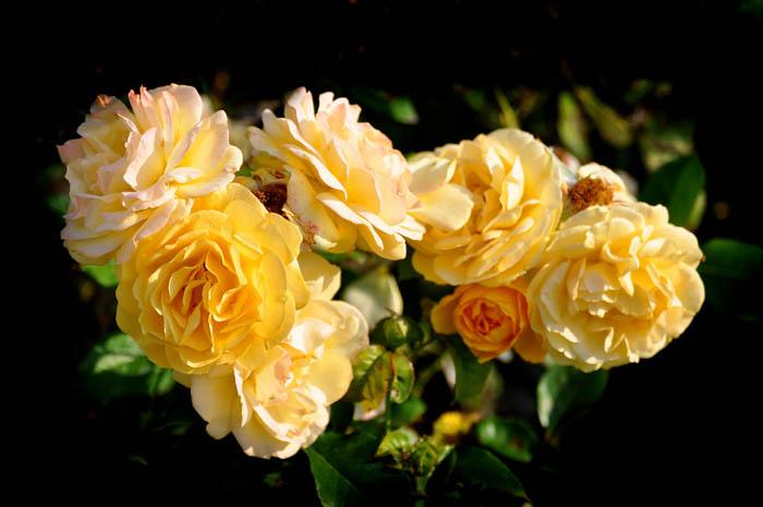 01 Rose Garden B