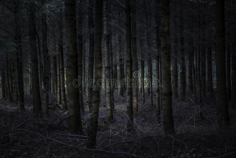 темный-и-страшный-ес-46462241.jpg