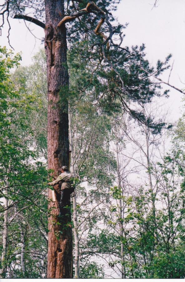 Привычное дело - лезть на дерево