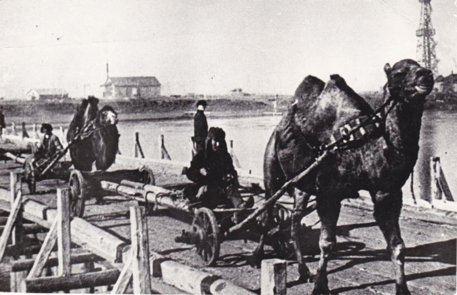 Верблюды-нефтяники
