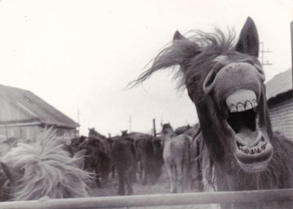 Не смешите лошадей!