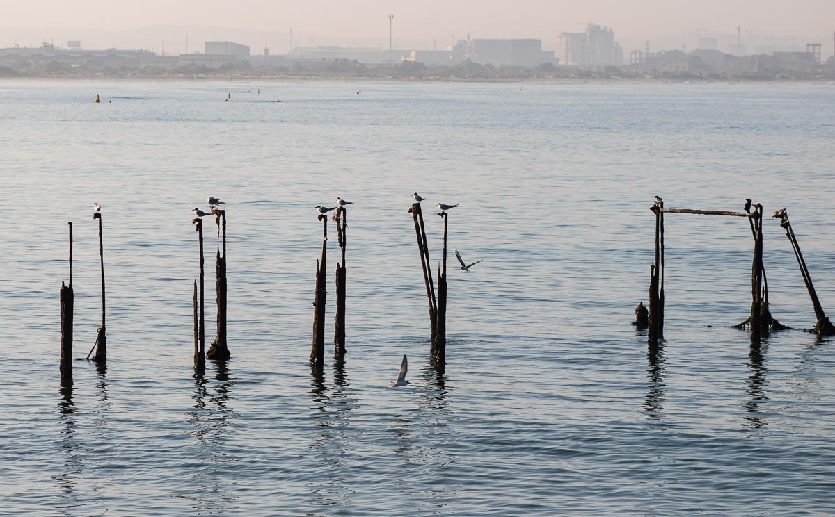 Рыбный день в Акко