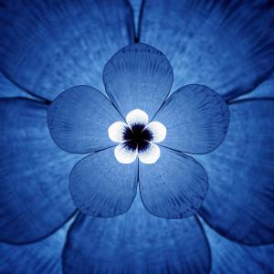 whitebeakflower_1529877i1