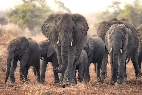 Марио Морено. Путешествие по Африке (17 фото)