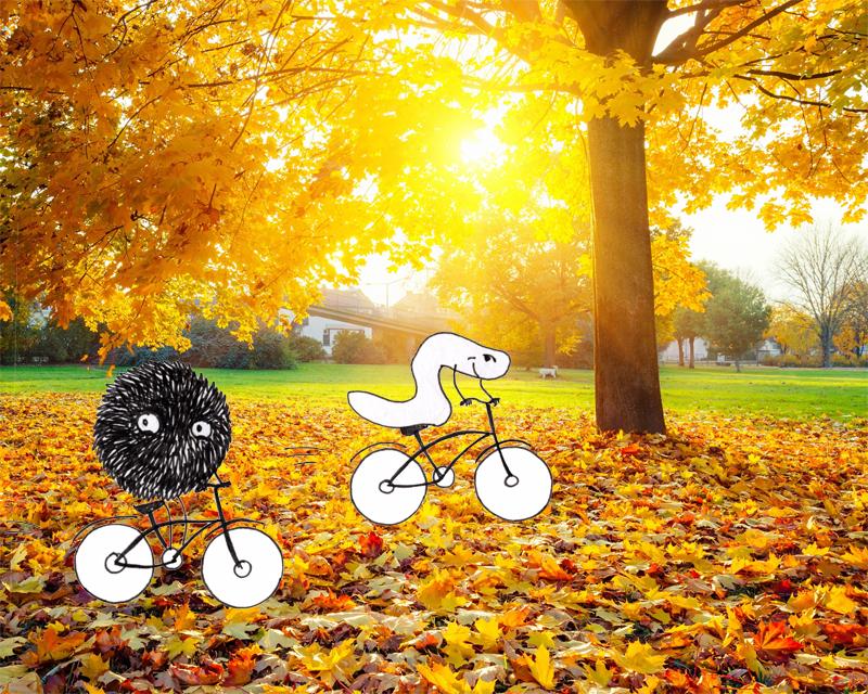 zv_autumn_800px.JPG