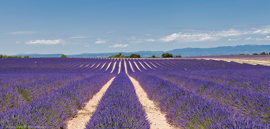 lavender-fields-of-the-french-provence-near-valensole