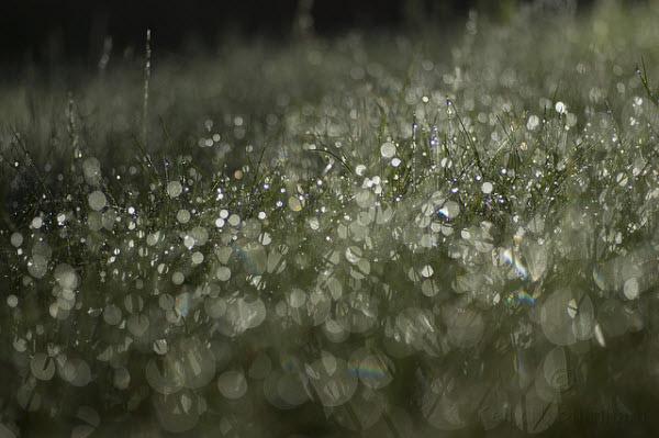 Как фотографировать в дождливую погоду и как снимать дождь.