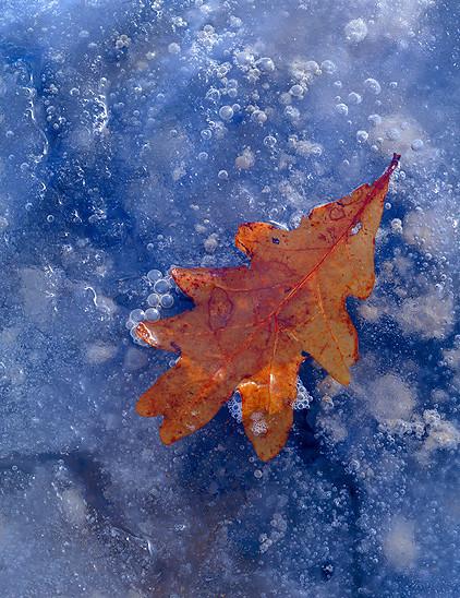 600x700xautumn-on-ice.jpg.pagespeed.ic.YVGzGua8tE