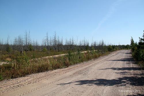 Дорога Каукъярви (ныне Каменка) - Кямяря (ныне Гаврилово)