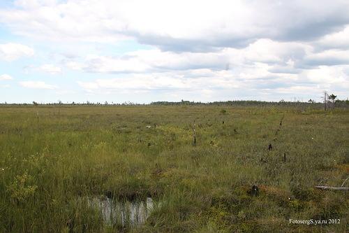 Проволочные заграждения на болоте