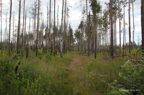 Укрепрайон Суммаярви-Ляхде (Summajärven (Lähteen) lohko)