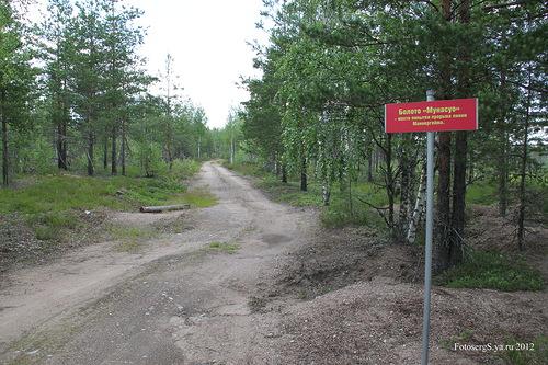 Дорога вдоль болота