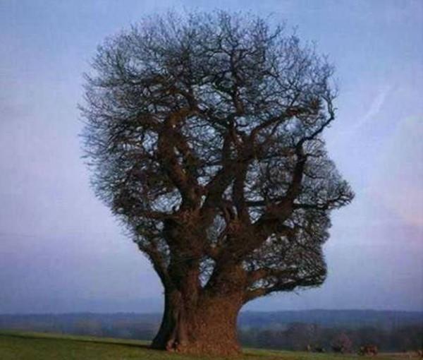 Способность видеть чудесное в обыденном - неизменный признак мудрости. Р.Эмерсон
