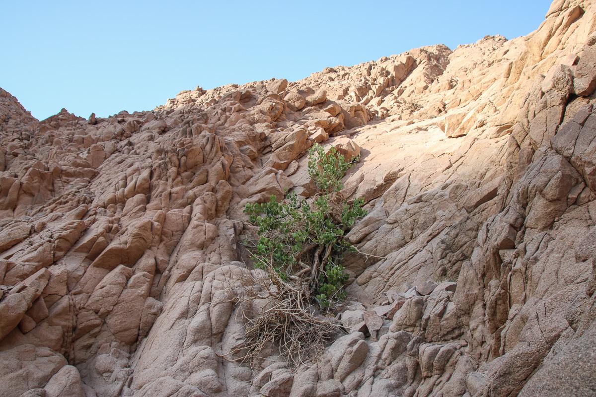 Eilat_035.jpg