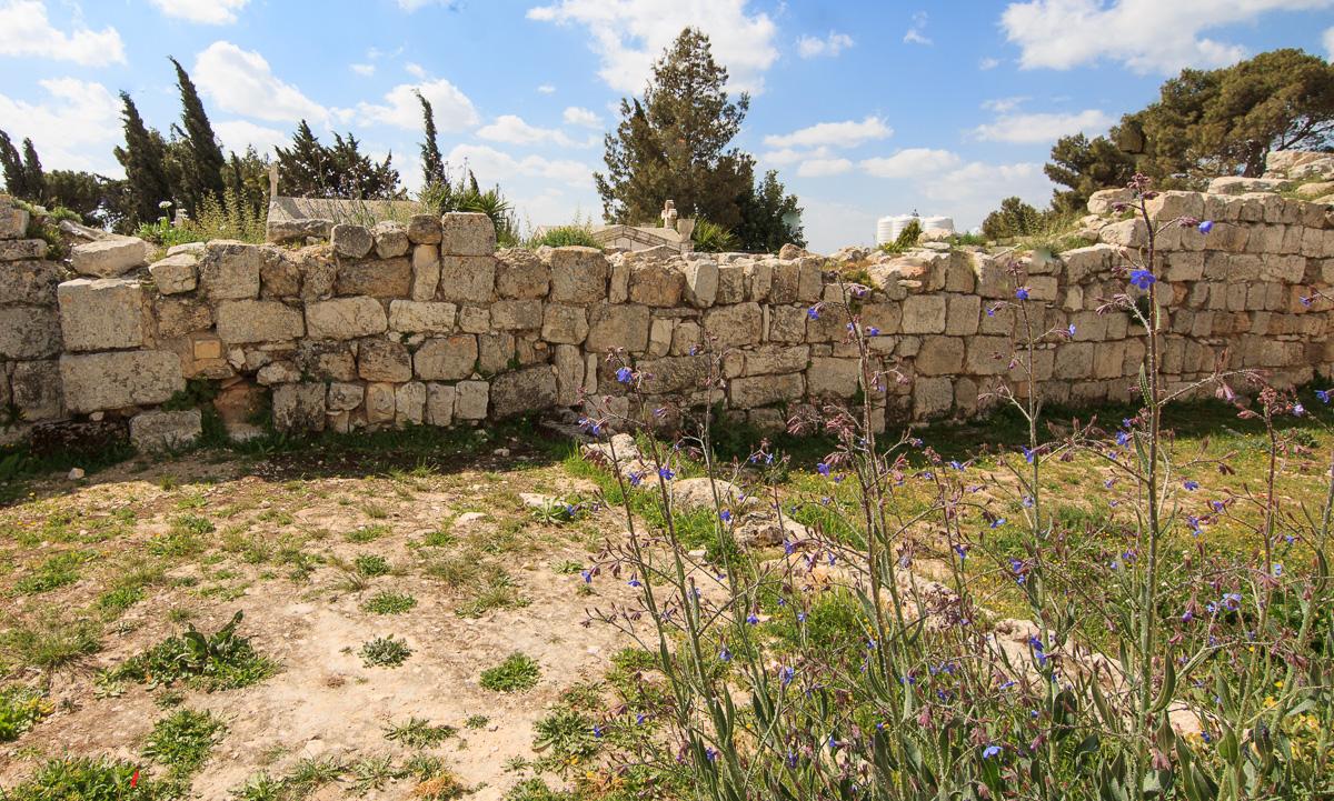 Цветы на Голанах golan_010.jpg