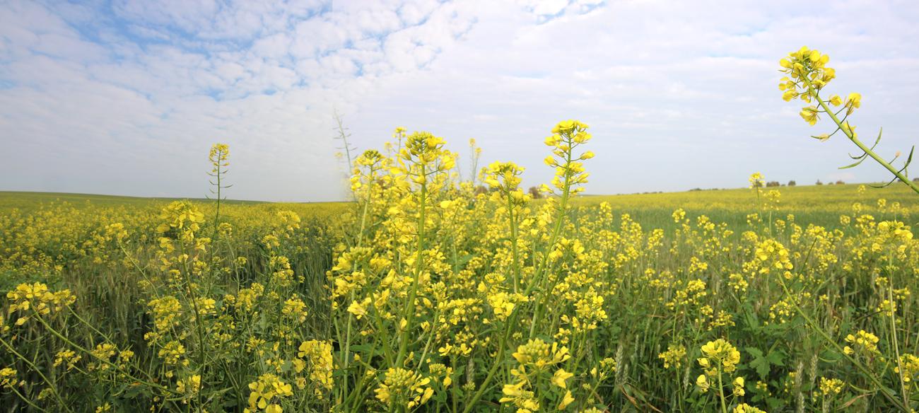 Yellow_007.jpg