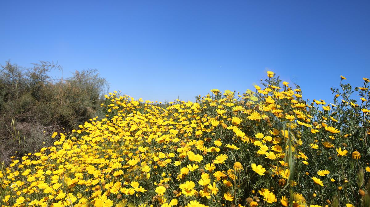 Yellow_011.jpg