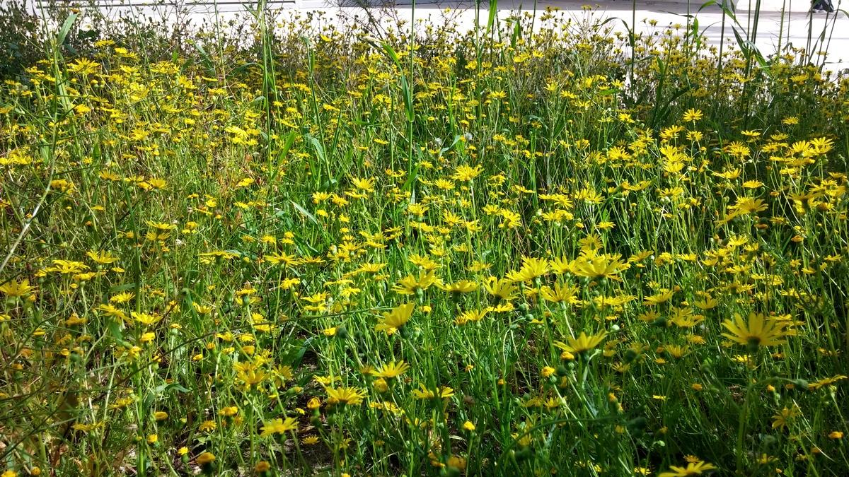 Yellow_015.jpg