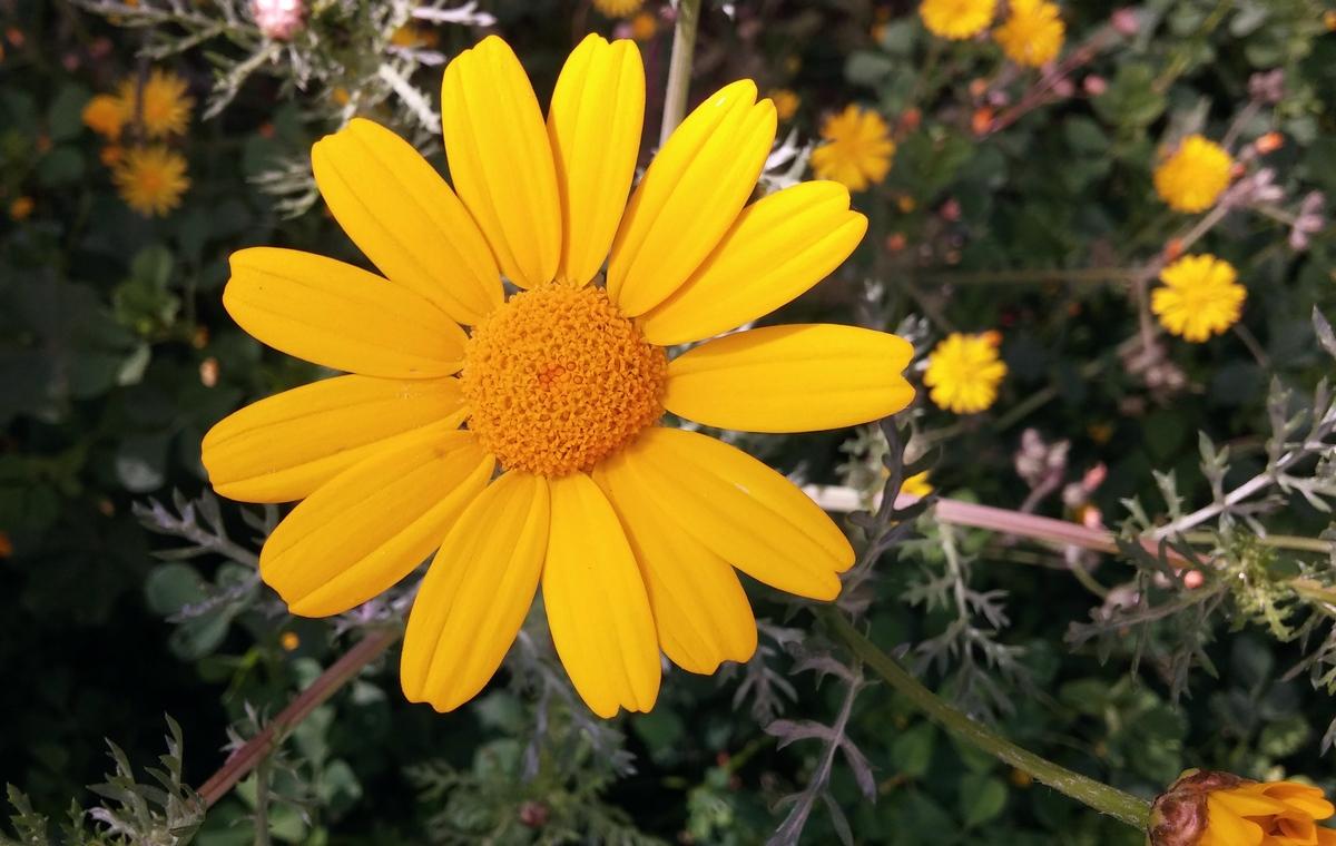 Yellow_017.jpg