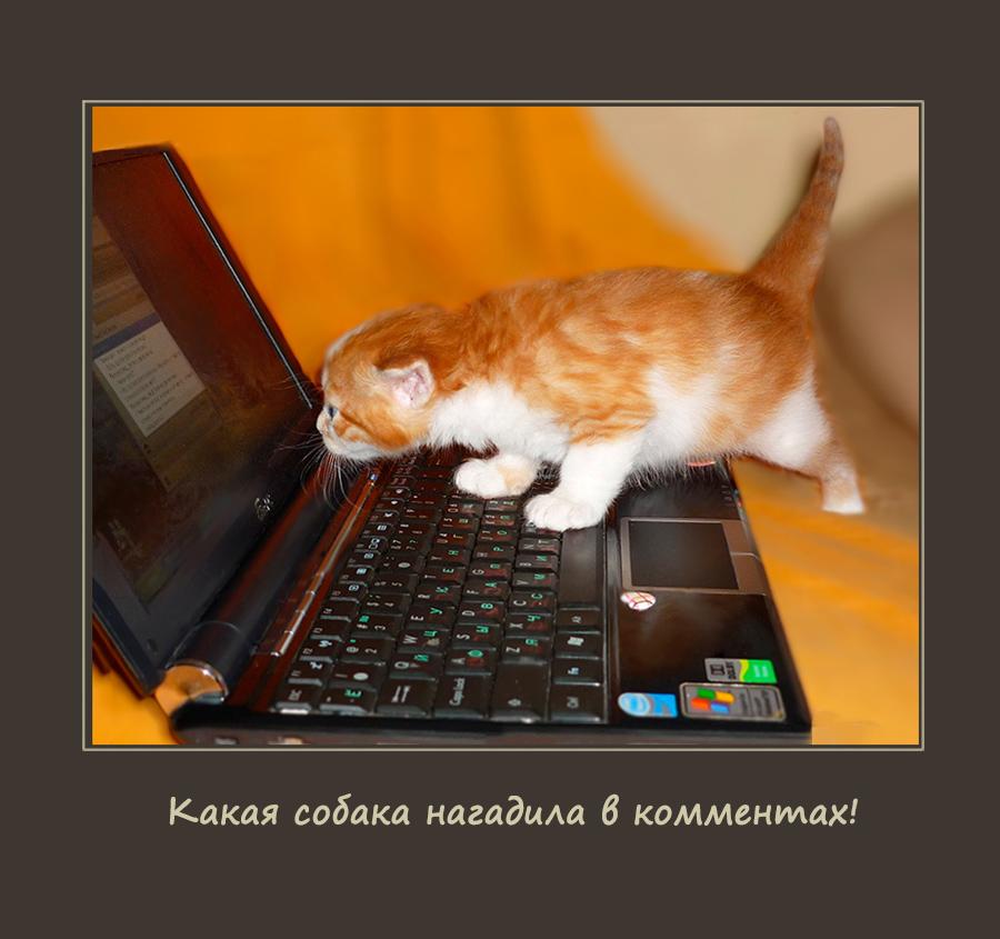 Котики на страже! ^.^}))~