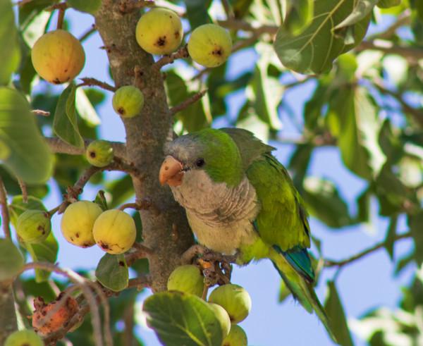 Лакомки и общага на дереве