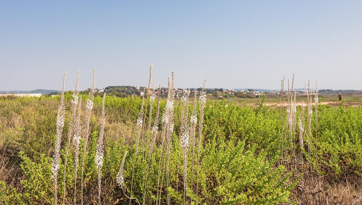 Цветущий хоф а-Боним, берег Строителей