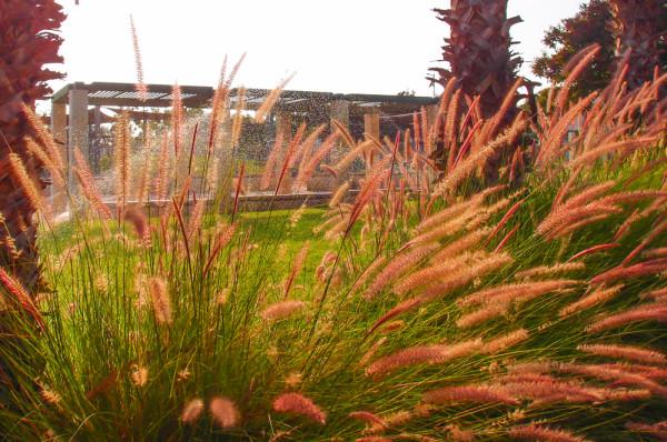 Почему степные травы не полыхают осенними красками?